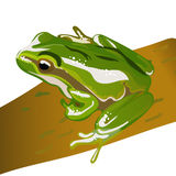 Large green frog vector illustration EPS 10 royalty free illustration