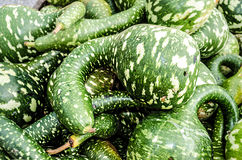 Large Green Gourd Pile Stock Photos