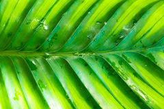 Rainforest Leaf royalty free stock photo