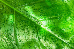 Rainforest Leaf stock photos