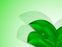 Large green leaves with drops of dew on green white background. Vector illustration Royalty Free Stock Photography
