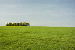 Large green meadow and copse. Large green meadow, copse on the horizon and blue sky royalty free stock photo