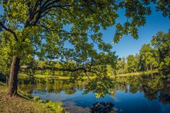 Large green oak. Grove in city park with pond. distortion perspective fisheye lens. Large green oak in the sunlight. Grove in a city park with a pond. distortion stock photo
