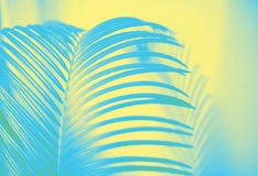 Free Large Green Palm Leaf And A Shadow Royalty Free Stock Photography - 109753097