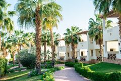 Large green palm trees on the premises of the hotel stock image