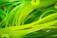 Large Green Squid Stock Photo