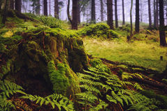Large green stump in summer forest Stock Photos