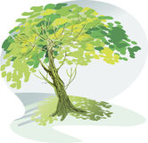 A large green tree Stock Photography