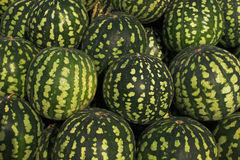 Large and green watermelons. Many large green fresh ripe watermelons Stock Photos