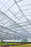 Large greenhouse Royalty Free Stock Photos