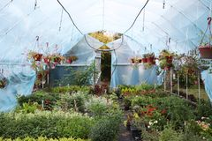 Large greenhouse with flowers. Beautiful flowers stock image