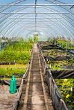 Large greenhouse, plant nursery, garden centre Royalty Free Stock Photo
