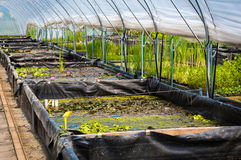 Large greenhouse, plant nursery, garden centre Royalty Free Stock Images