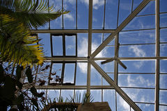 Large greenhouse roof and ferns Stock Photos