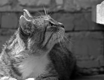 A large grey cat sitting on the porch outside the house. Royalty Free Stock Photography