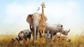 Safari Animals in Africa Composite. Large group of African safari animals composited together in a scene of the grasslands of Kenya Stock Photos