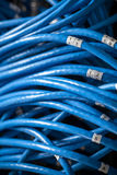 Large group of blue utp Internet cables Royalty Free Stock Photos