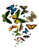 Large group of bright butterflies isolated on white stock illustration