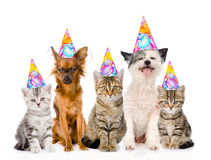 Large group cats and dogs in birthday hats. isolated on white