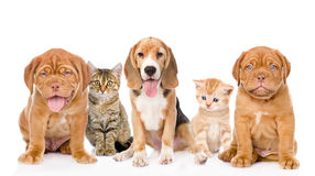 Large group of cats and dogs sitting in front. isolated on white stock photo