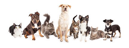 Large Group of Cats and Dogs Together Royalty Free Stock Images