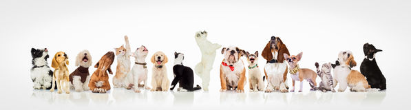 Large group of curious dogs and cats looking up Stock Image