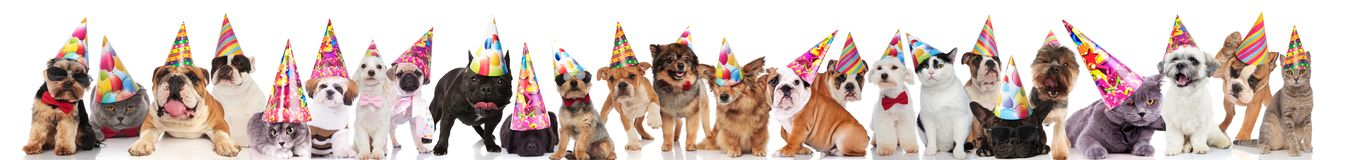 Large group of cute cats and dogs wearing colorful caps stock photo
