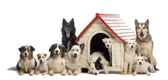 Large group of dogs in and surrounding a kennel Stock Photography