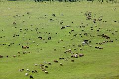 Large group of farm animals in the field Royalty Free Stock Image