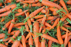 Large group of freshness carrots Stock Photography