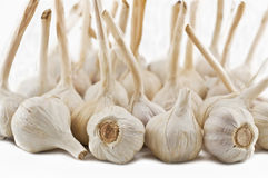 Large group of garlic Royalty Free Stock Photos