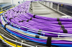 Large group of lilac utp cables stock photo