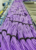 Large group of lilac utp cables Stock Image