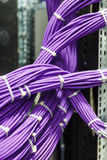 Large group of lilac utp cables Stock Images