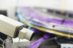 Large group of lilac utp cables Royalty Free Stock Photos