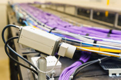 Large group of lilac utp cables Royalty Free Stock Images