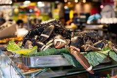 A large group of live soft shelled crabs in a container at the Boqueria market in Barcelona. royalty free stock photo