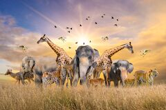 Free Large Group Of African Safari Animals. Wildlife Conservation Concept Stock Photos - 174172993
