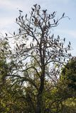 Large group of open billed stork bird on the tree stock photos