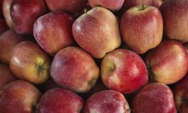 Large group of organic red apples Stock Image