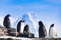 Large group of penguins Stock Photography