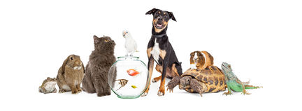 Large Group of Pet Animals Together Royalty Free Stock Photography