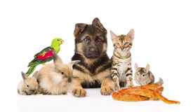 Large group of pets along. Isolated on white background.  Royalty Free Stock Image