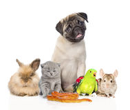 Large group of pets along. Isolated on white background Royalty Free Stock Photography