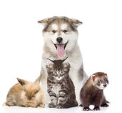 Large group of pets. Isolated on white background Royalty Free Stock Images