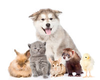 Large group of pets looking at camera. isolated on white Stock Photography