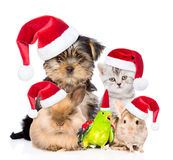 Large group of pets in red christmas hats. isolated on white Royalty Free Stock Photos