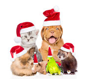Large group of pets in red christmas hats. isolated on white Royalty Free Stock Image