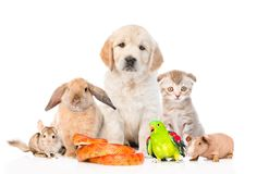 Large group of pets together in front view. Isolated on white. Background stock image