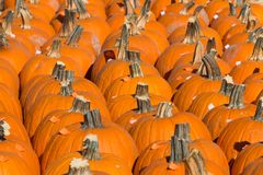 Large Group of Pumpkins For Sale in Pumpkin Patch. A large group of pumpkins ready for sale in a pumpkin patch Stock Image
